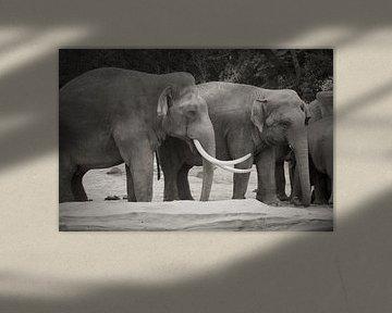 Elefantentreffen von Stephen Young