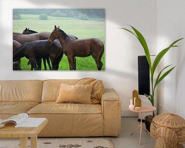 Paarden in de regen van Norbert Sülzner