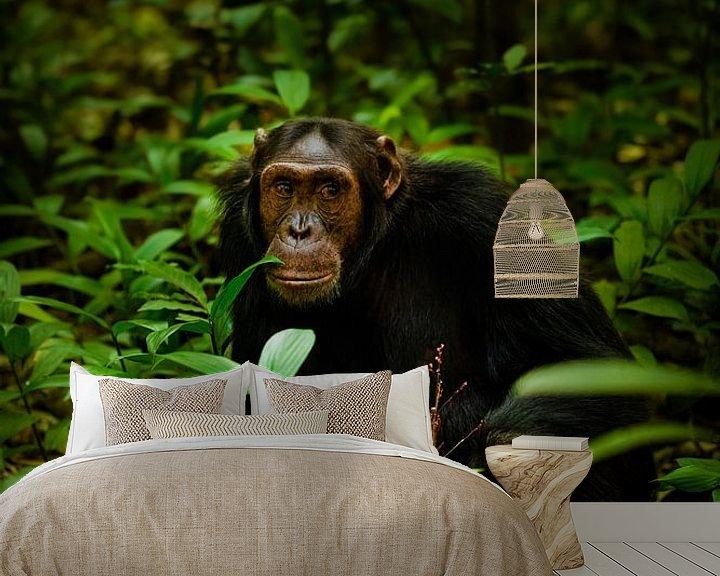 Beispiel fototapete: Porträt eines Schimpansen von Gunter Nuyts