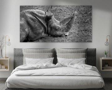 Liegendes Nashorn von Marcel Kerdijk