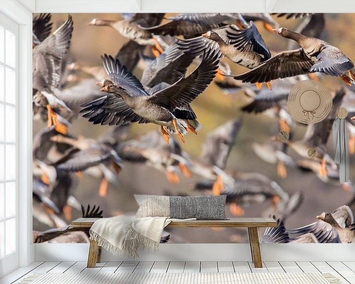 Beispiel fototapete: Fliegende Gänse von Cees van Vliet