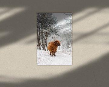 Schottischer Highlander in Winterlandschaft von Jan Willem De Vos