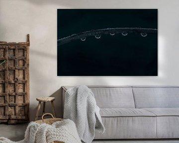 Stiel mit Wassertropfen im Dunkeln von Wim Stolwerk