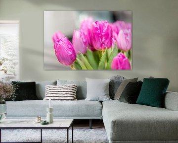 Rosa Tulpen von Wim Stolwerk
