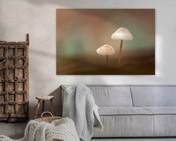Pilze in weichem und stimmungsvollem Licht von Angelique Koops