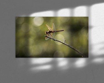 Libelle met tegenlicht van Caroline de Brouwer