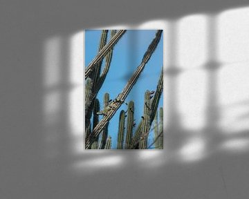 Grüner Leguan liegend in Kaktusvegetation auf Curacao von Thijs van den Burg