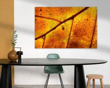 Springstaartje op vurig herfstblad van Thijs van den Burg