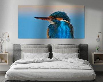 Eisvogel - Porträt
