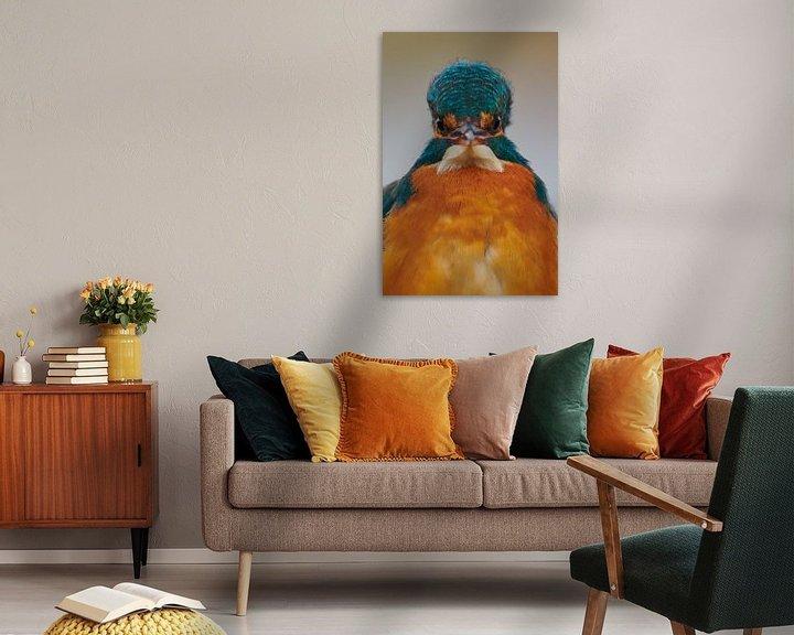 Impression: Martin-pêcheur - que regardez-vous ? sur IJsvogels.nl - Corné van Oosterhout