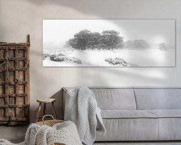 Een panorama van een koude en mistige winter ochtend op het Balloërveld in Drenthe. Sneeuw bedekt de van Bas Meelker
