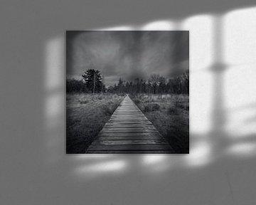 Rauwe Vennen, De Moer, Bohlenweg von Patrick Rosenthal