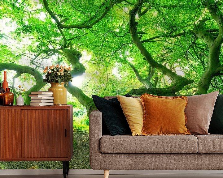 Beispiel fototapete: Süntel Buche mit grünen Baumkronen von Oliver Henze