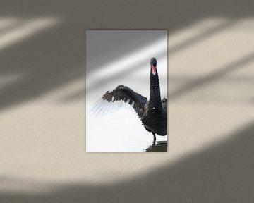 Zwarte Zwaan van Sander Meertins