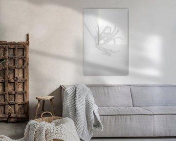 Schaduw van een koekoeksbloem van Tot Kijk Fotografie: natuur aan de muur