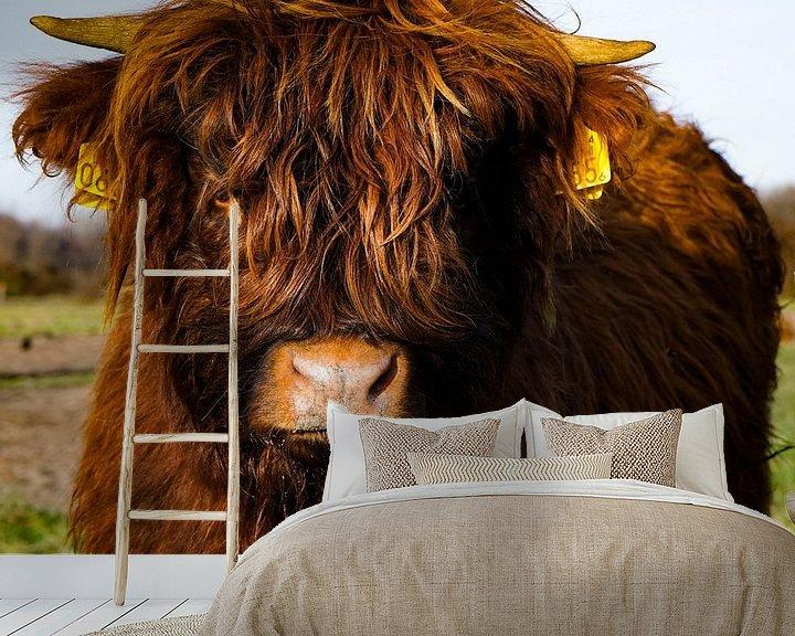 Beispiel fototapete: Schottischer Highlander Kalb von Amber van der Velden