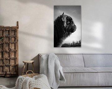 Schotse Hooglander Kalf van Amber van der Velden