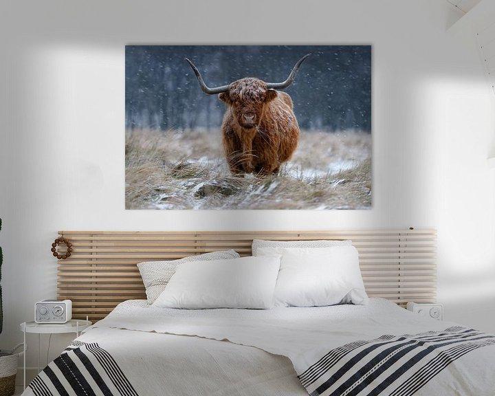 Beispiel: Highlander im Schnee von Richard Guijt Photography