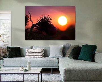 Eine Distel während des Sonnenuntergangs von Karijn | Fine art Natuur en Reis Fotografie