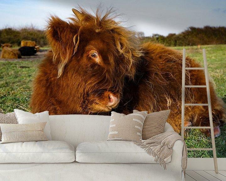 Beispiel fototapete: Schottisches Highlander-Kalb von Amber van der Velden