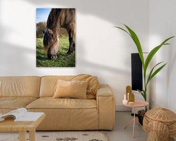 Konik Pferd von Amber van der Velden