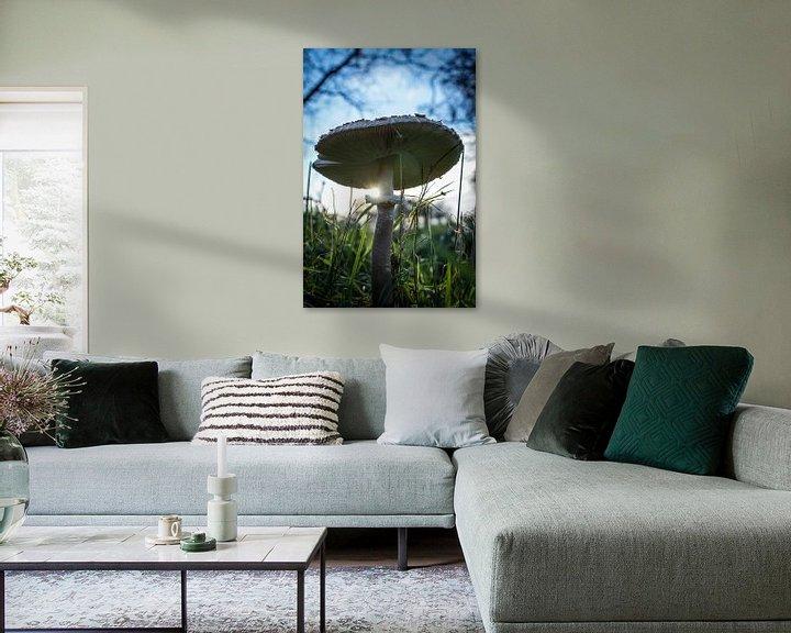 Beispiel: Pilz im Licht von Amber van der Velden
