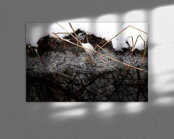 Bij de beek in de winter van Thomas Jäger