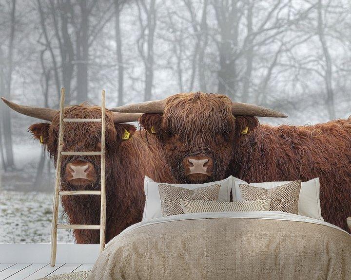 Beispiel fototapete: Highlander im Schnee von Anjo ten Kate