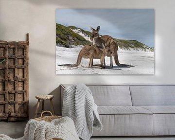 Kängurus, Lucky Bay, Cape Le Grand National Park, Westaustralien von Alexander Ludwig