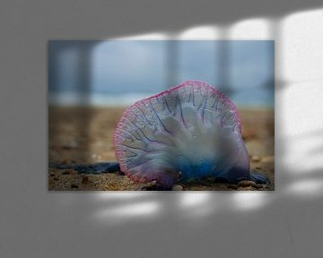 strandvondst von Leanne lovink