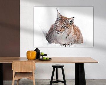 Een ironische lynx zit in de sneeuw en kijkt van Michael Semenov