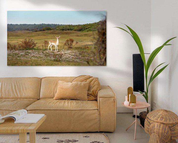 Beispiel: Junges Rehwild in den Dünen 4 von Percy's fotografie