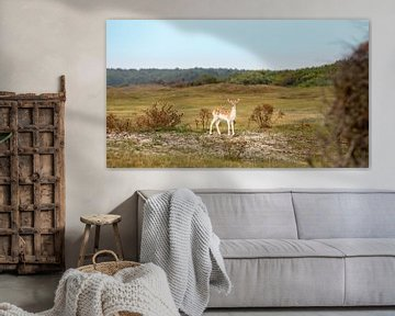 Junge Hirsche in den Dünen von Percy's fotografie