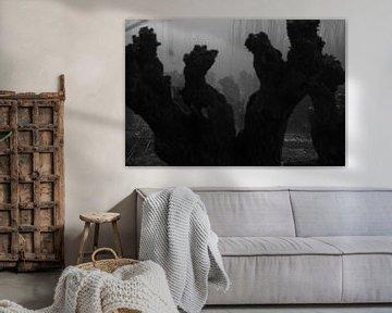 Spook wilgen von Jan Pott