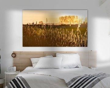 Ochtendlicht met schapen op de achtergrond 4 von Percy's fotografie