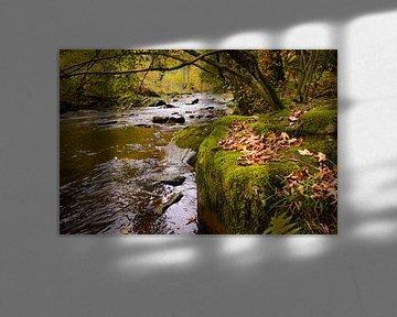 herfstbladeren op het mos van Bas Wolfs