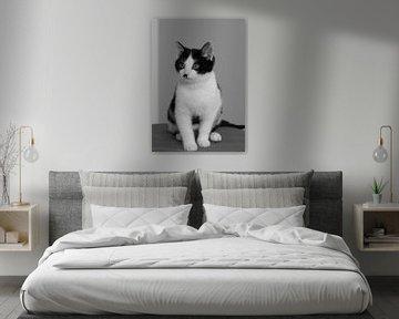 Katze Saartje von Antoon van Osch