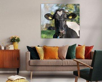 zwartbonte koe sur ChrisWillemsen
