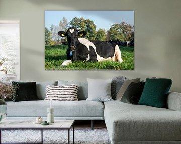 zwartbonte koe liggend in de wei sur ChrisWillemsen