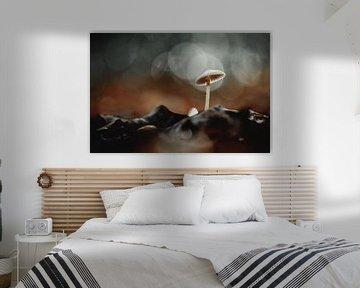 Herfst paddenstoel met bokeh van KB Design & Photography (Karen Brouwer)