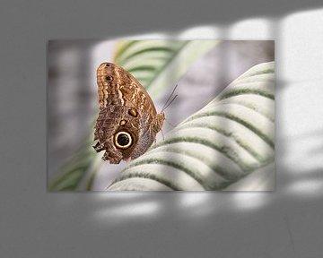 Schmetterling in seiner schönsten Form von Henrico Fotografie