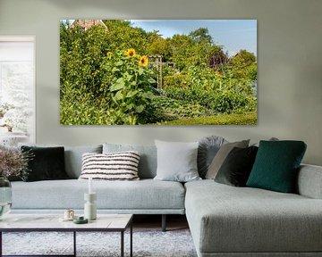 Sonnenblumen in einem botanischen Garten von Percy's fotografie