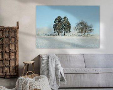 Eerste sneeuw in Belgische Ardennen van Marinella Geerts