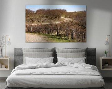 Duinpad met bosjes van Percy's fotografie