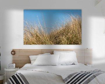 L'herbe à marmotte dans les dunes sur Percy's fotografie