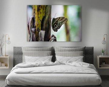 Schmetterling auf einem Stiel von Peter de Kievith Fotografie