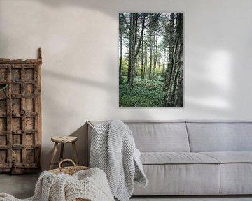 Scandinavisch bos van Jan Willem De Vos