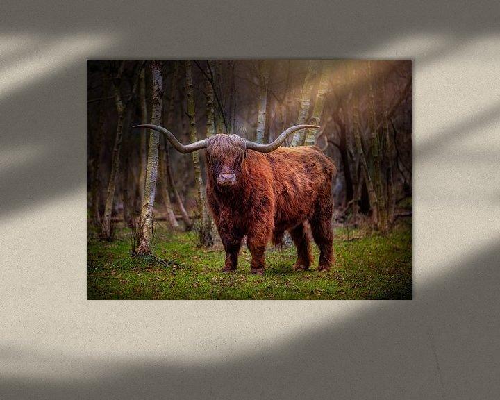 Beispiel: Schottischer Highlander von Costas Ganasos