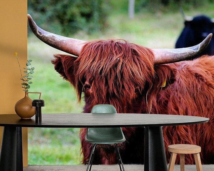 Beispiel fototapete: Schottischer Highlander in Limburg von Foto Graaf Eric