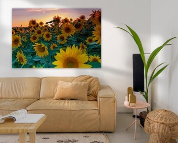 Ein Feld voller Sonnenblumen in der Abendsonne während der goldenen Stunde von Kim Willems